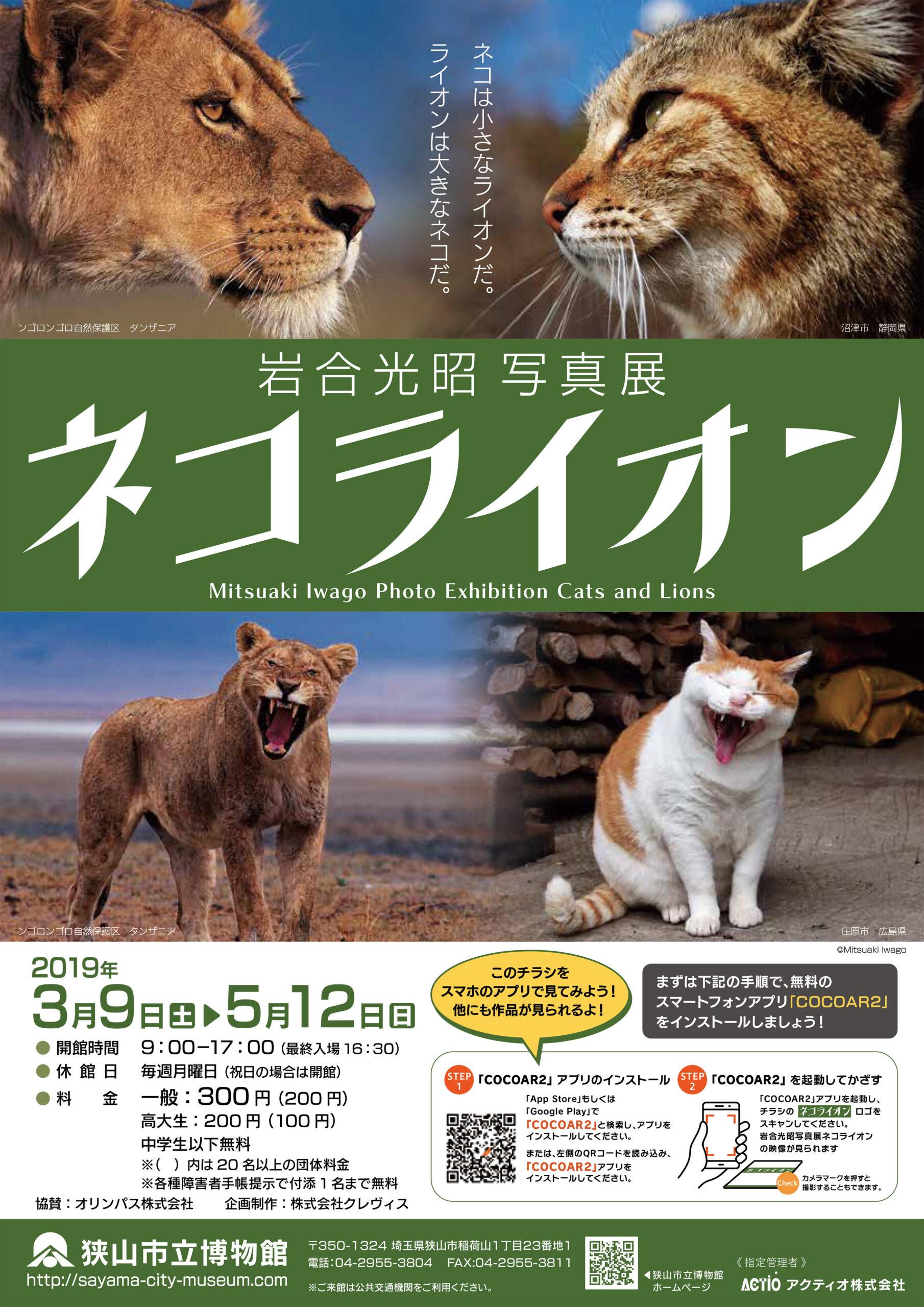 平成31年度 春期企画展「岩合光昭写真展 ネコライオン」
